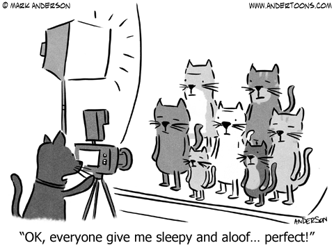 Cat Cartoon.