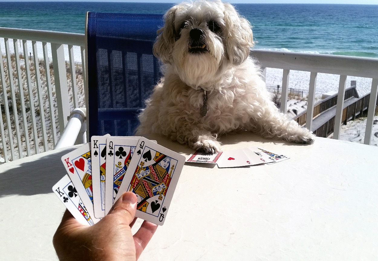 Dog Playing Cards.
